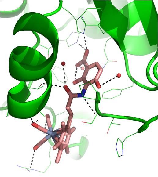 picutre enzyme - cr